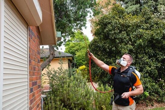 HomeMasters Pest Control Adelaide Termite Possum removal