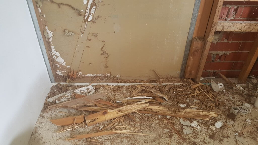 Termite Inspections Adelaide