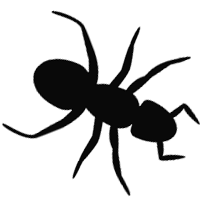 Termite Control and inspections Adelaide